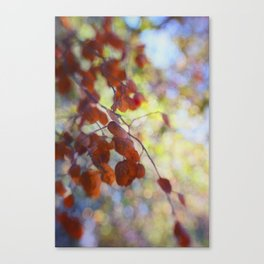 Dreaming on a Summer Day abstract nature photo Canvas Print
