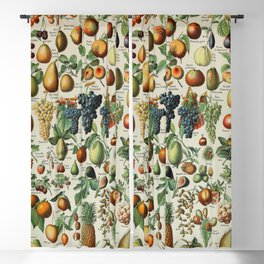 Fruits Vintage Scientific Illustration French Language Encyclopedia Lithographs Educational Blackout Curtain