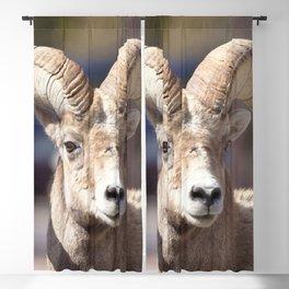 Watercolor Bighorn Ram 06, The Dare Blackout Curtain