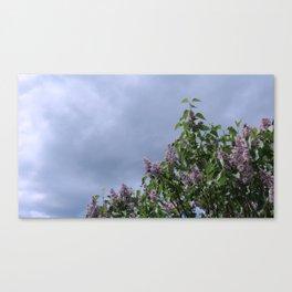 Lilacs No. 2 Canvas Print
