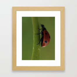 Ladybird on a Flower, macro photography, home, still life, fine art, animal love, nature photo Framed Art Print