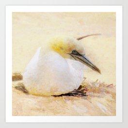 Gannets Art Print