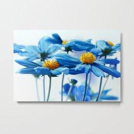 Cosmea blue 224 Metal Print