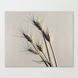 prairie wheat Canvas Print