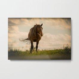 Horse In the green feild. Metal Print