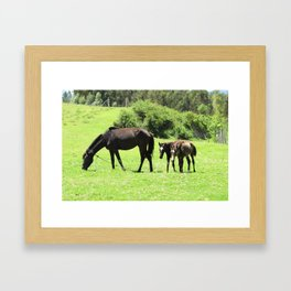 Horses in a Pasture Framed Art Print