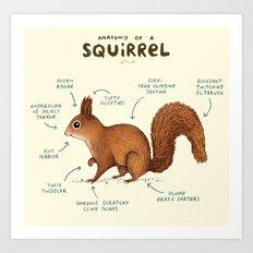 Anatomy of a Squirrel Art Print