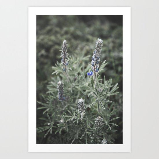 Wildflowers | Botanical Photography | Plant | Flowers | Nature Art Print