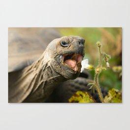Cute Tortoise Eating - Beautiful Canvas Print