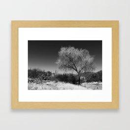 Silver Tree Framed Art Print