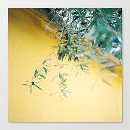 Olive tree Canvas Print