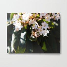 Bee in Late Winter (2 of 2) Metal Print