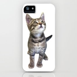 Tabby Kitten iPhone Case