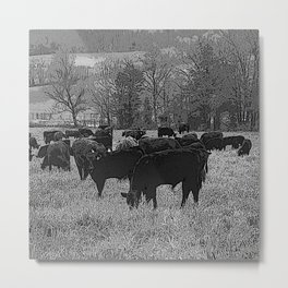 Black & White Cattle Grazing Pencil Drawing Photo Metal Print