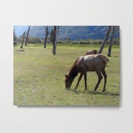 Sitka deer Metal Print