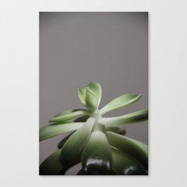 growing plant Canvas Print