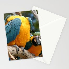 Blue And Gold Macaws Stationery Cards