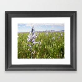 Indian Hyacinth Framed Art Print