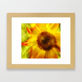 Sunflower A Blaze Framed Art Print