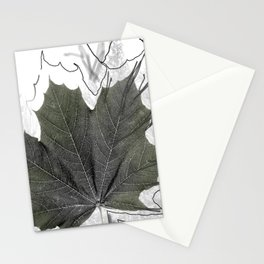 Norway Maple - Érable de Norvège - Acer platanoides Stationery Cards