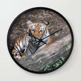Tiger Relaxing Wall Clock