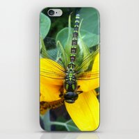 dragonfly iPhone & iPod Skins featuring Dragonfly by constarlation