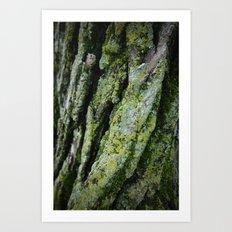 moss, bark Art Print