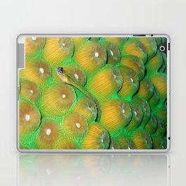 Small Wrasse on Hard Coral Laptop & iPad Skin