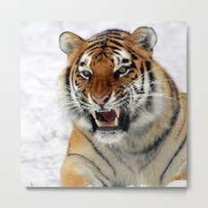 Tiger_2015_0123 Metal Print
