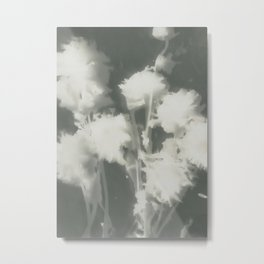 Gray Dahlias Metal Print