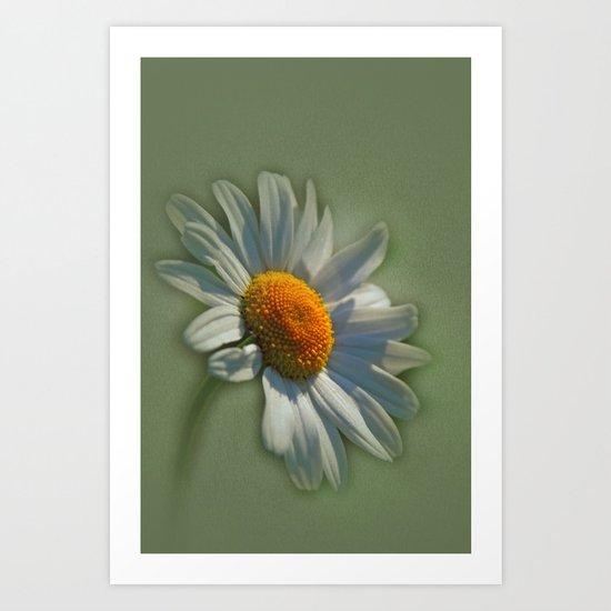 daise Art Print