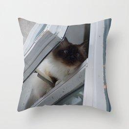 Icelandic Siamese Cat Throw Pillow