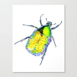 Flower Beetle Canvas Print