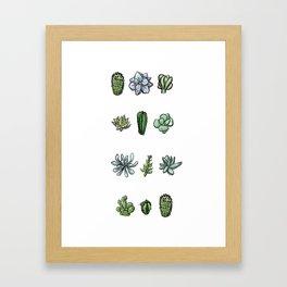One Dozen Succulents Framed Art Print