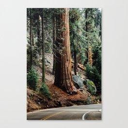 giant sequoia i Canvas Print