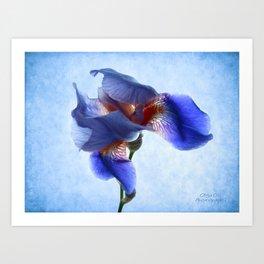 Iris Dance Art Print