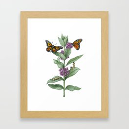 Monarch Butterfly Life Cycle Framed Art Print