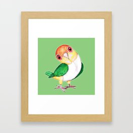 White bellied caique Framed Art Print