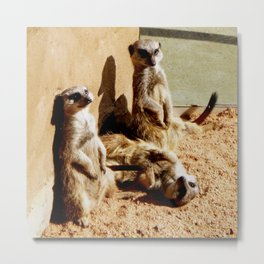Meerkat Togetherness Metal Print