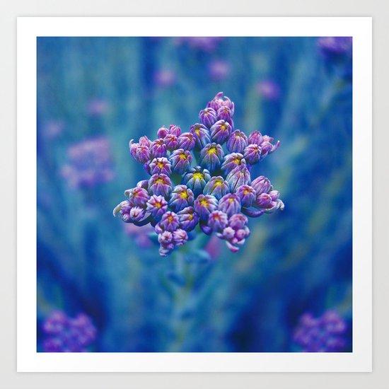 wild herb I Art Print