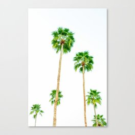 palm trees in palms springs 2 Canvas Print