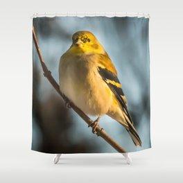 Goldfinch in Winter Shower Curtain