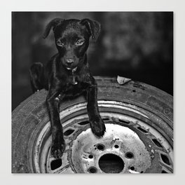 b/w dog Canvas Print
