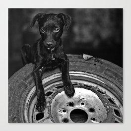 b/w dog Canvas Print