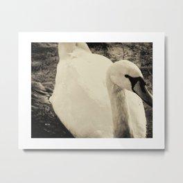 Swan - Antiqued Portrait Metal Print