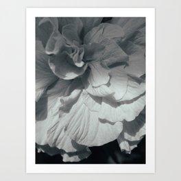Hibiscus BW Art Print