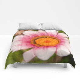 Southern African White ❁ Purple Gazania Flower Comforters