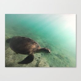 Mayotte Canvas Print