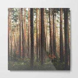 Through The Wood Metal Print