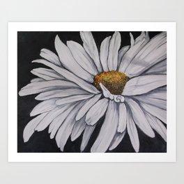 Pollari Shasta Daisy Art Print